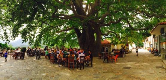 Arna Square